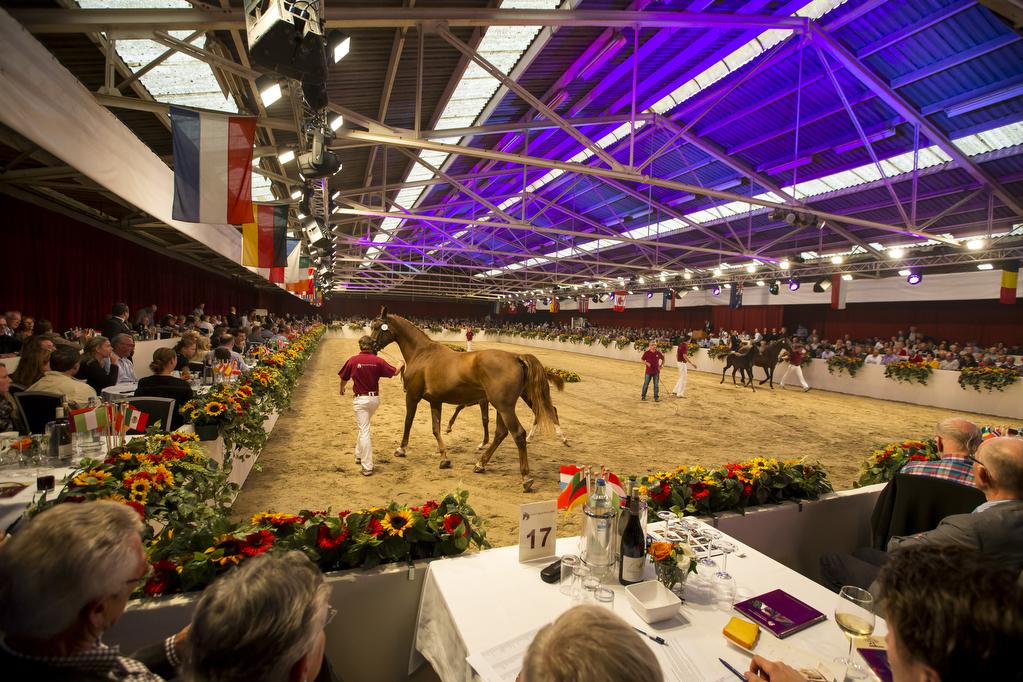 Limburgse Veulenveiling 2013 © DigiShots